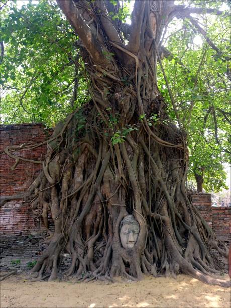 What to do in Ayutthaya; D.I.Y. Ayutthaya