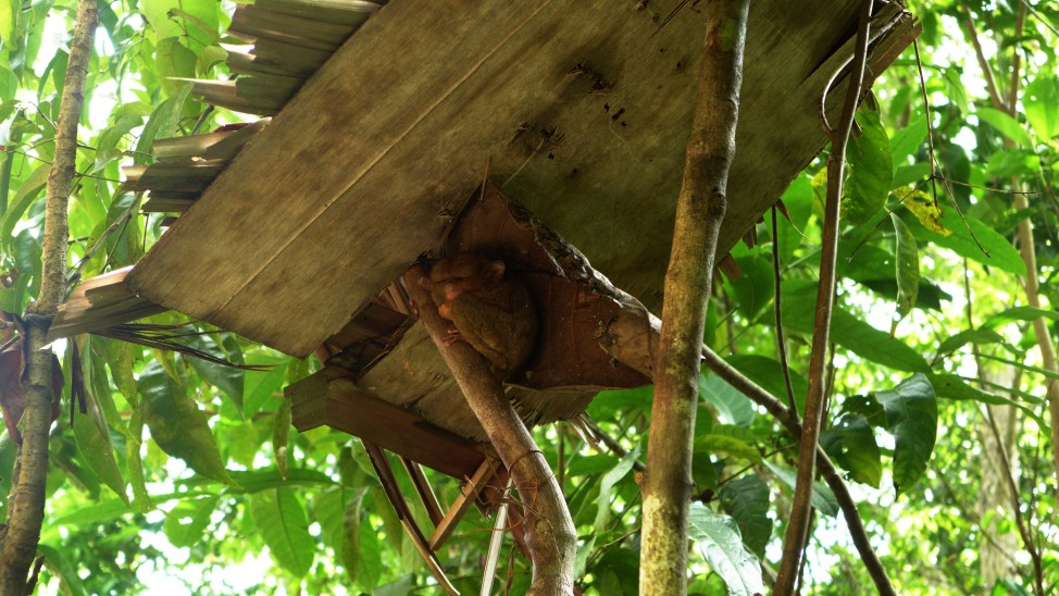 Tarsier Sanctuary, Loboc, Bohol; Bohol Countryside tour; D.I.Y. Bohol; What to see and do in Bohol; Bohol attractions; Backpacking Philippines