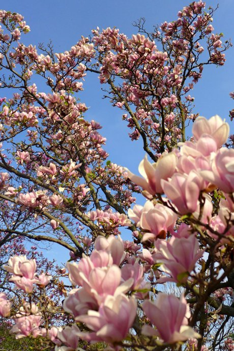 Rochester Lilac Festival 2015 in Highland Park