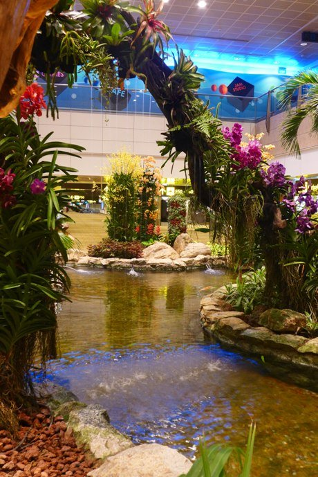What to do in Singapore; Changi Airport Layover; Singapore Changi Airport Terminal 2; Orchid Garden